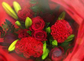 Поздравительный букет красных роз