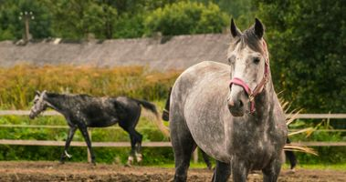 Бесплатные фото лошадь,животные,пастбище,конь как млекопитающее,кобыла,трава,дерево