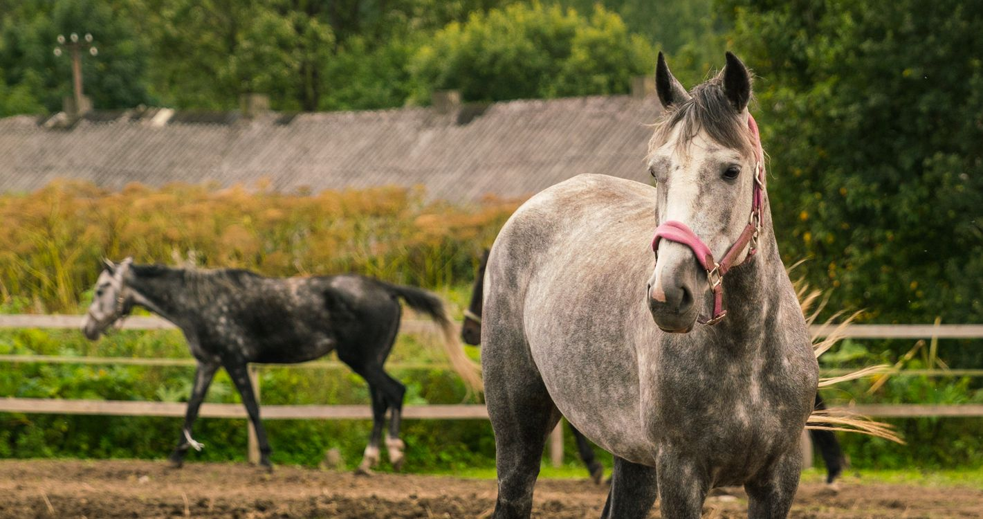 Free photo horse, animals, pasture - to desktop