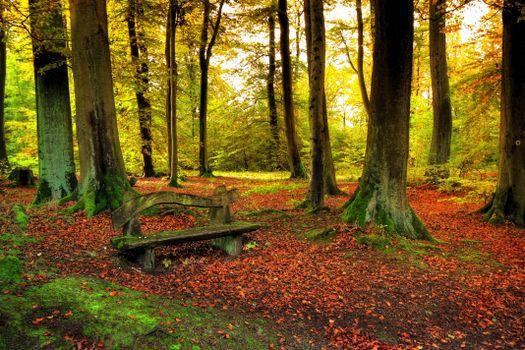 Фото бесплатно осень, парк, лес, деревья, лавочка, скамейка, пейзаж
