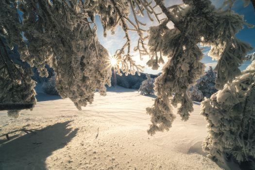 Заснеженный лес на вершине Ай-Петри · бесплатное фото