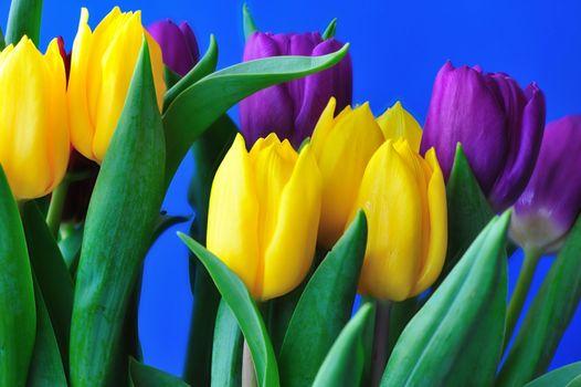 Подарок из тюльпанов · бесплатное фото