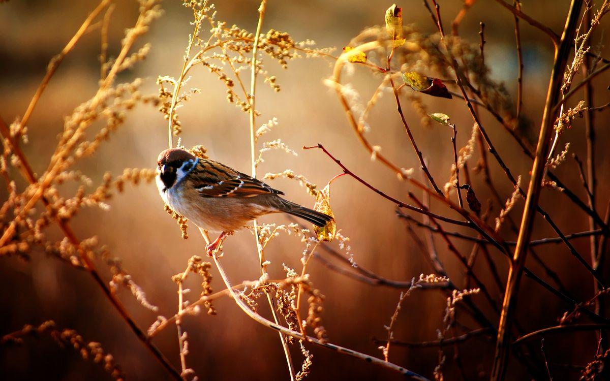 Фото бесплатно воробей на ветке, птицы, ветка - на рабочий стол