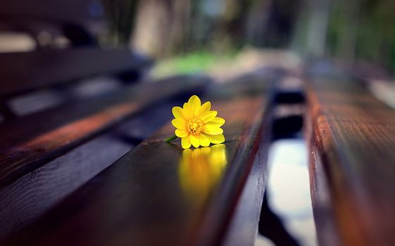 Photo free bench, yellow flower, flowers