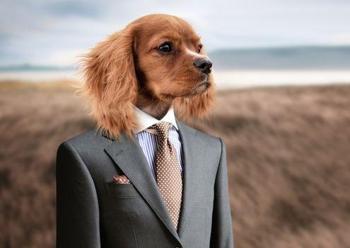 Фото бесплатно Бобик Жучкин, собака, костюм
