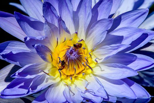 Бесплатные фото водяная лилия,цветок,макро,флора