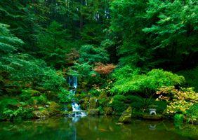 Бесплатные фото Waterfall,Japanese Gardens,Portland,парк,водоём деревья,водопад,пейзаж