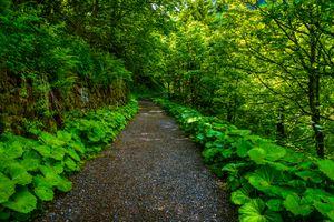 Заставки Бад-Гаштайн,тропа у склона горы,Австрия,Bad Gastein,лес,дорога,деревья