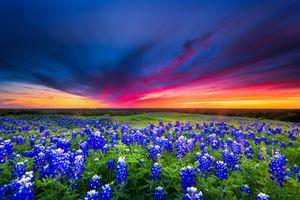 Фото бесплатно цветочное поле, поле, пейзаж