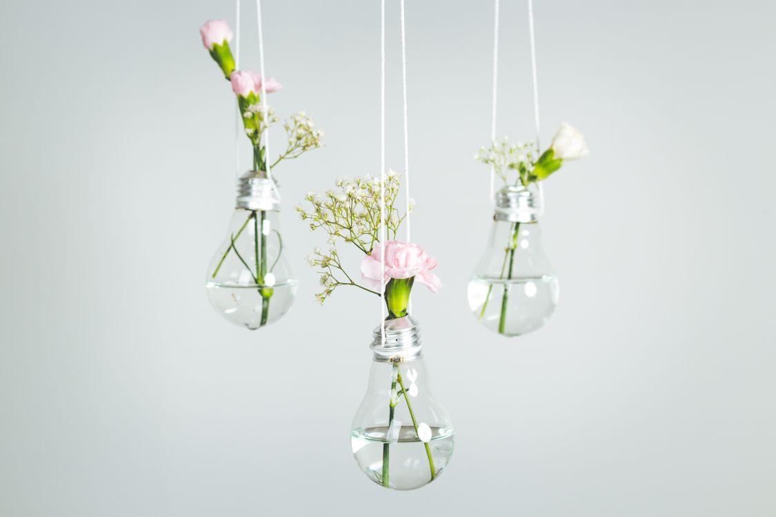 Фото бесплатно белое, минимальный, minimalisme, erewre, студия, студийный свет, идея, завод, минималистичный, Сделай сам, Лампа, стекло, цветок, свет, цветы