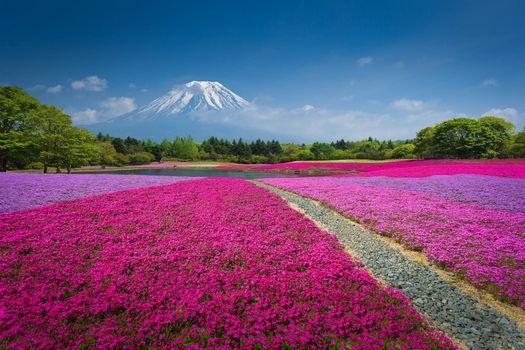 Фото бесплатно Fuji, Яманакако Япония, Гора Фудзияма