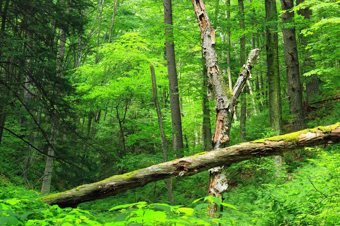 Фото бесплатно лес, старые деревья, поваленные - на рабочий стол
