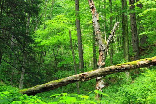 Фото бесплатно лес, старые деревья, поваленные