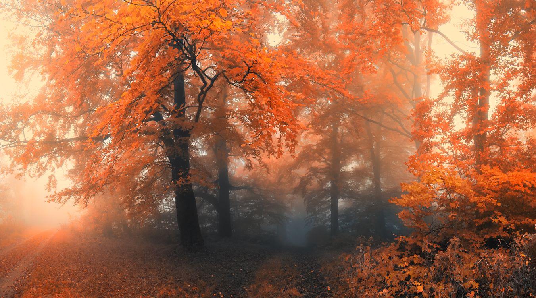 Обои осенние листья, дорога, цвета осени картинки на телефон
