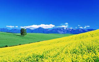 Заставки красоты, земля, поля