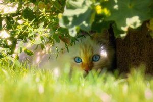 Фото бесплатно кот, лицо, листья