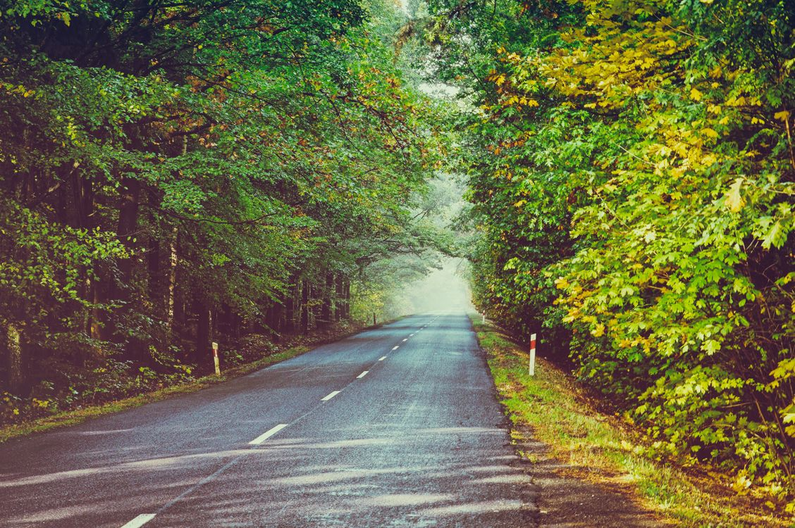 осенняя дорога · бесплатная заставка