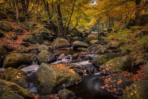 Заставки осенние листья, камни, лес