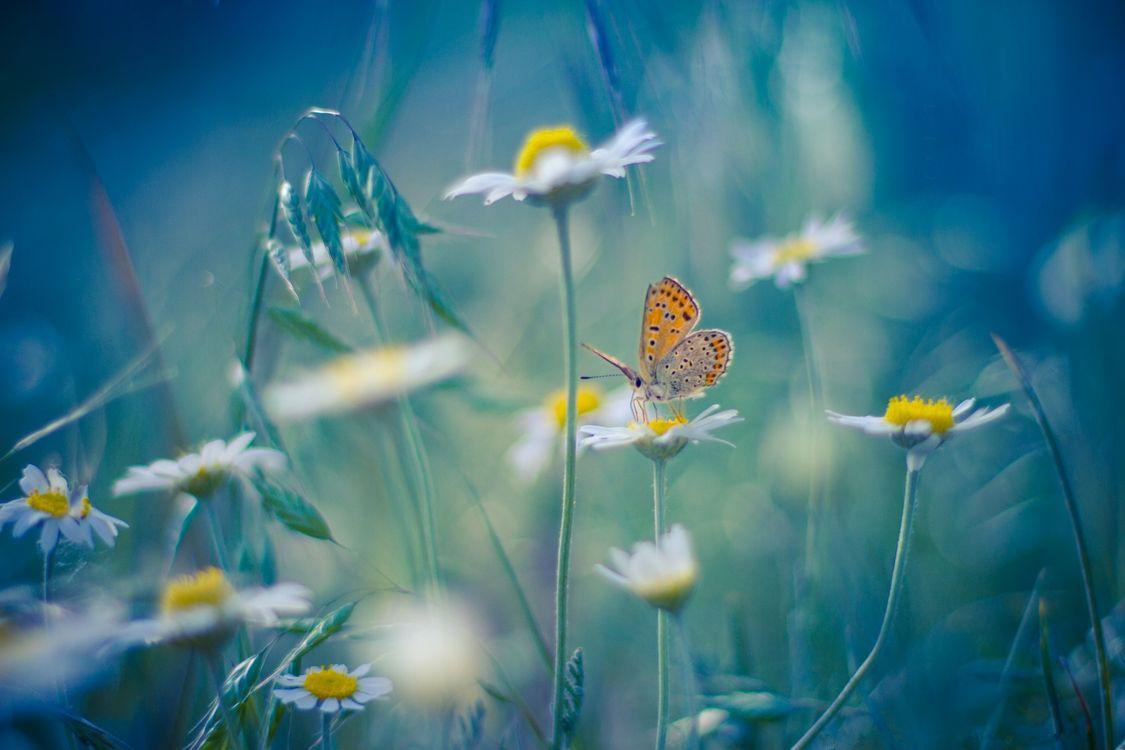 Фото бесплатно поле, цветы, ромашки - на рабочий стол