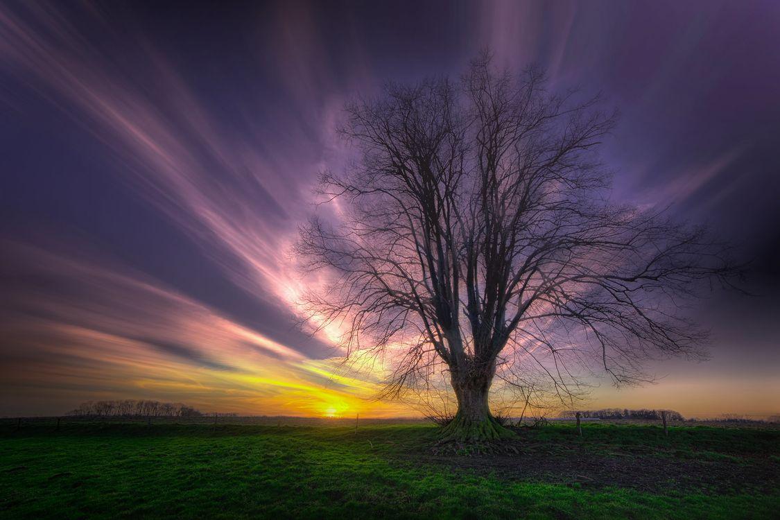 Фото бесплатно поле, дерево, природа - на рабочий стол