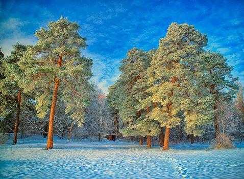 Фото бесплатно следы, парк, деревья