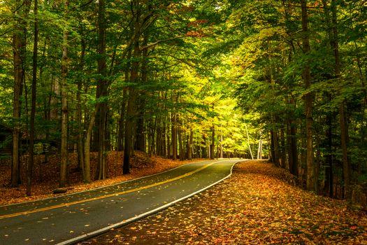 Бесплатные фото Letchworth State Park,осень,дорога,осенние листья,лес,деревья,пейзаж