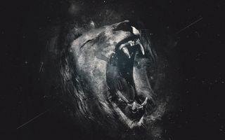 Фото бесплатно Лев, Львы, зубы