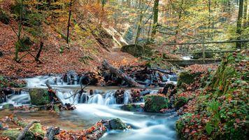 Бесплатные фото осень,лес,парк,речка,водопад,мост,природа