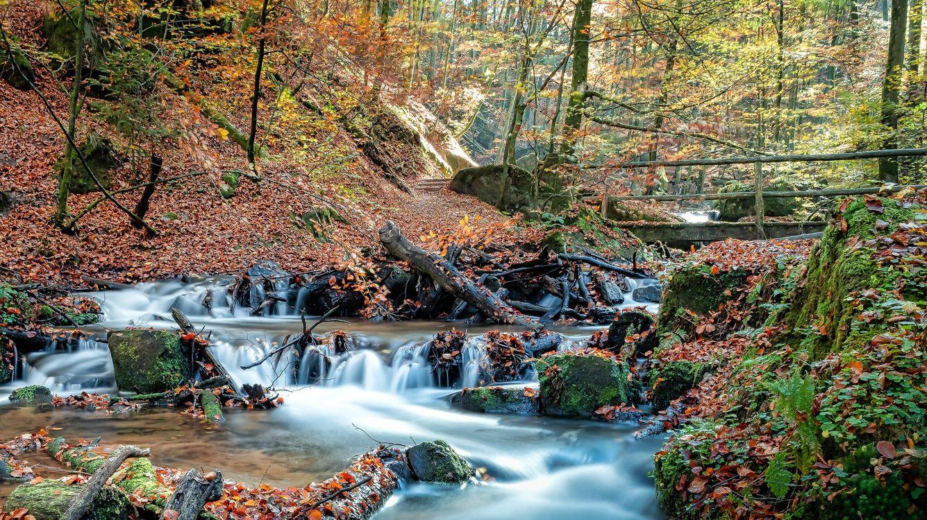 Обои осень, лес, парк, речка, водопад, мост, природа, течение, пейзаж, осенние краски на телефон | картинки пейзажи
