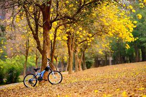 Фото бесплатно осень, велосипед, боке, цветы, настроение, Весна, деревья, желтый, листопад, парк