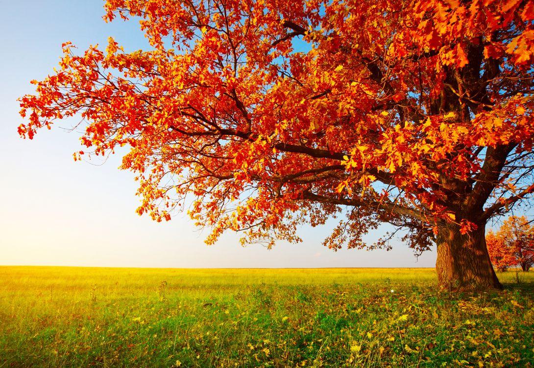Фото бесплатно осень, поле, осеннее дерево - на рабочий стол