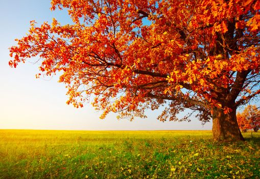 Photo free autumn, field, autumn tree
