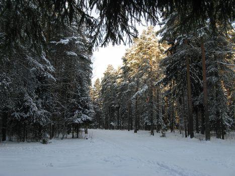 Бесплатные фото Природа,зима,лес