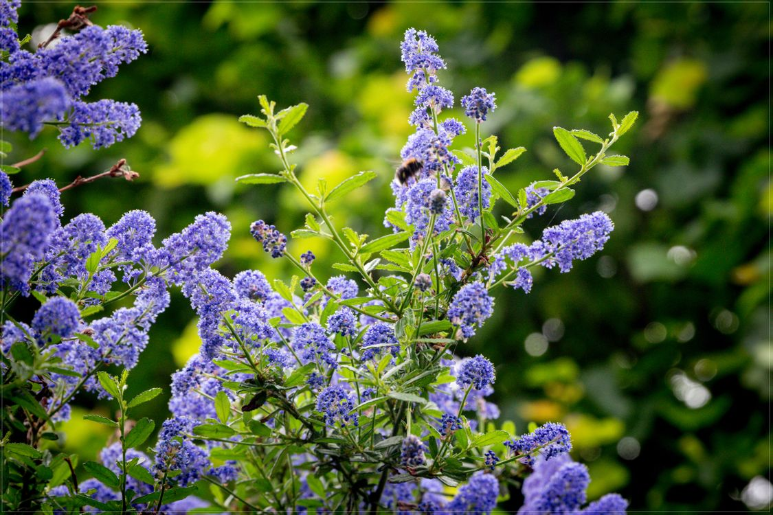 Photos for free purple flowers, lilac, plant - to the desktop