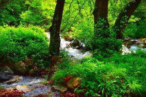 Бесплатные фото магическая река,лес,камни,деревья,природа,пейзаж