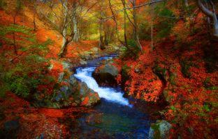 Фото бесплатно магическая река, осень, краски осени