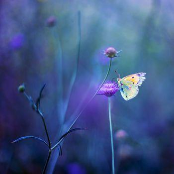 Заставки поле,цветы,манипуляции,природа,разнообразие,трава,растения,макро,бабочка