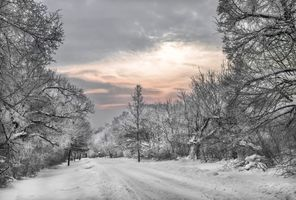 Фото бесплатно sunrise, forest, winter