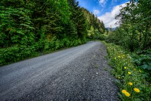 Photo free Road, dandelions, dirt road