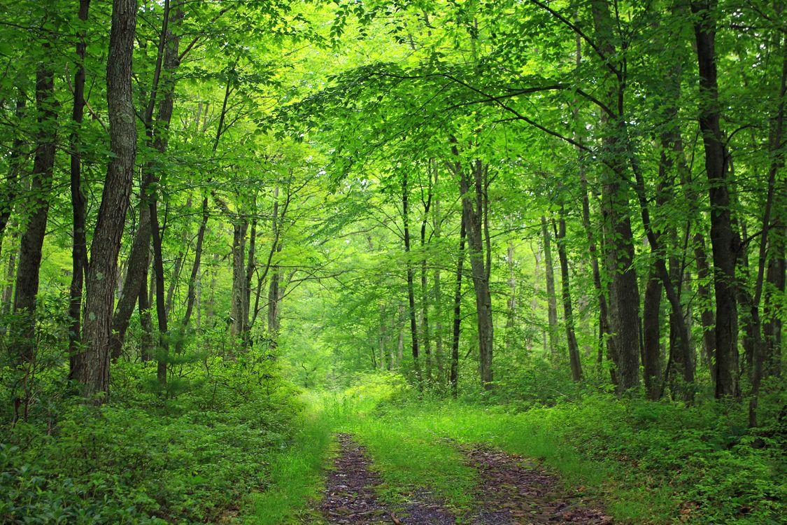 Фото бесплатно дорога, лесная дорога, зелень - на рабочий стол