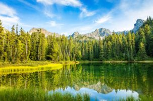 Бесплатные фото Mt Rainier National Park,Lower Crystal Lake,горы,озеро,деревья,ели,природа
