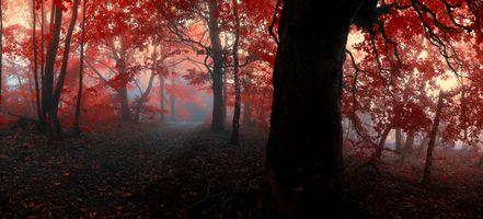 Фото бесплатно деревья, осенние краски, закат