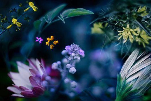 Цветы - разнообразие в макросъёмке · бесплатное фото