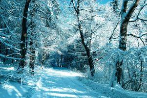 Фото бесплатно лес, мороз, дорога