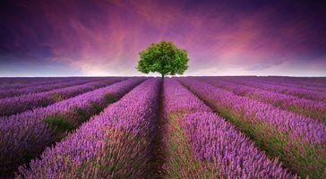 Фото бесплатно природа, цветы, небо