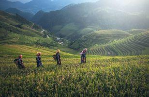 Фото бесплатно сельская местность, пейзажи, Камбоджа