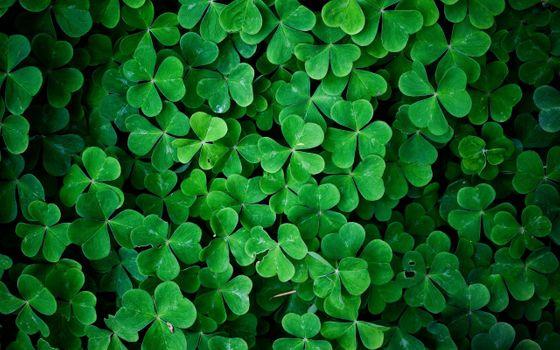 Photo free green, leaves, shamrock