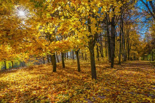 Фото бесплатно осень в москве, москва, пейзаж