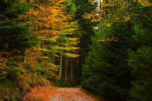 Фото бесплатно осень, лесная дорога, деревья