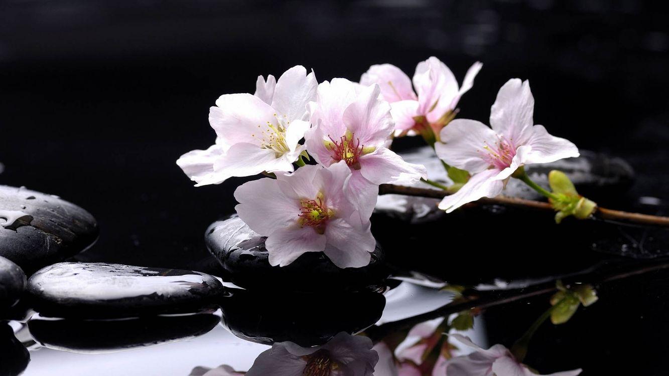 Free photo nature, flowers, stones - to desktop